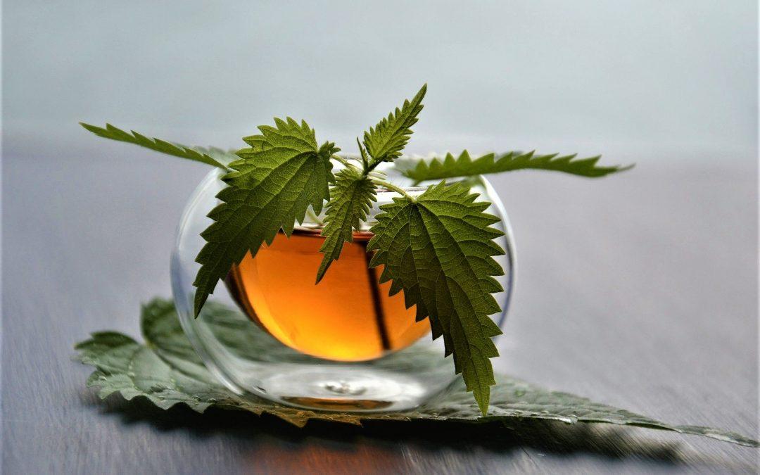 Tè verde organico Gunpowder
